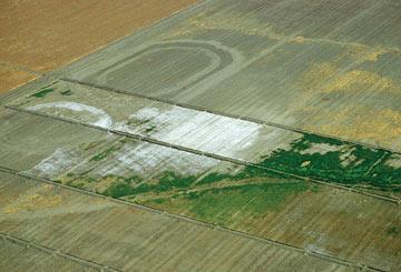 Severe salinization of fields in california for Soil salinization